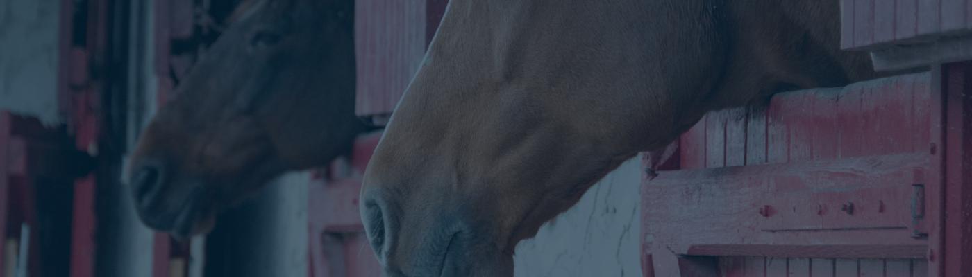 Equine Facility Lease Agreement Basics